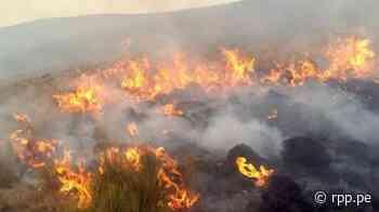 Junín: Más de mil hectáreas de pastizales afectadas por incendios forestales - RPP Noticias