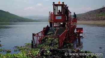 Retira Interapas lirio acuático de presa San José - El Exprés
