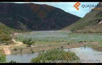 El lirio de la presa San José acabó tirado en Escalerillas - Quadratín - Quadratín San Luis