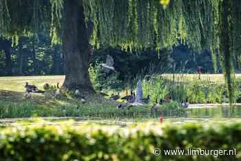 Treurwilg als zonnescherm voor ganzen in Voerendaal - De Limburger