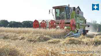 Magere Ernte in Ganderkesee: Für Getreide war es 2020 zu trocken - Nordwest-Zeitung