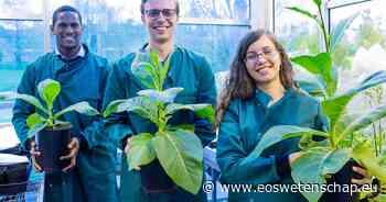 Fotosynthese krijgt duwtje in de rug - Eos Wetenschap