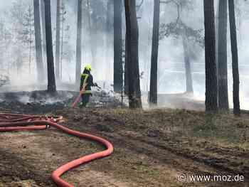 Einsätze: Wald- und Heidebrände in Neuruppin und Wusterhausen - Märkische Onlinezeitung