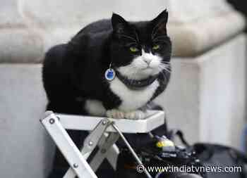 UK's Top diplomatic cat and 'Chief Mouser', Palmerston, retires - India TV News