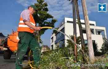 Trockene Böden In Oldenburg: Kaum Erholung für Bäume und Pflanzen - Nordwest-Zeitung
