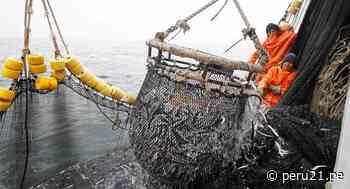 Sector pesca: ¿qué debemos hacer para estar a la par de Chile y Ecuador en exportación? - Diario Perú21