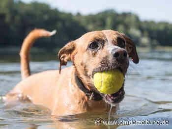 Vorsicht Sommer – diese Gefahren gibt es für Hunde - Emder Zeitung