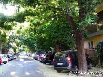 Italia Nostra Lazio: abbattimenti selvaggi di alberi a Monterotondo - Corriere Roma
