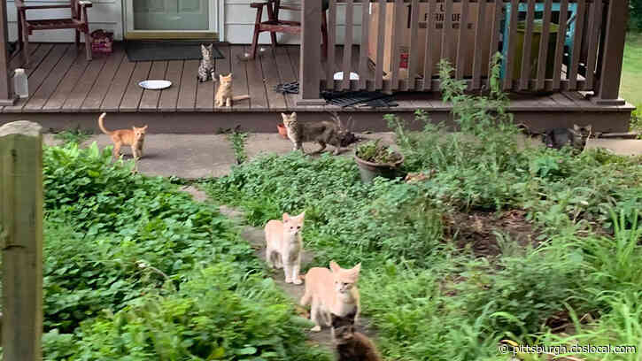 Animal Rescue Group Trying To Round Up More Than 30 Abandoned Cats In Washington Co.