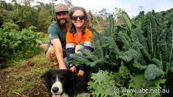 Move over Netflix, farmers turning to subscription to sell fresh veggies