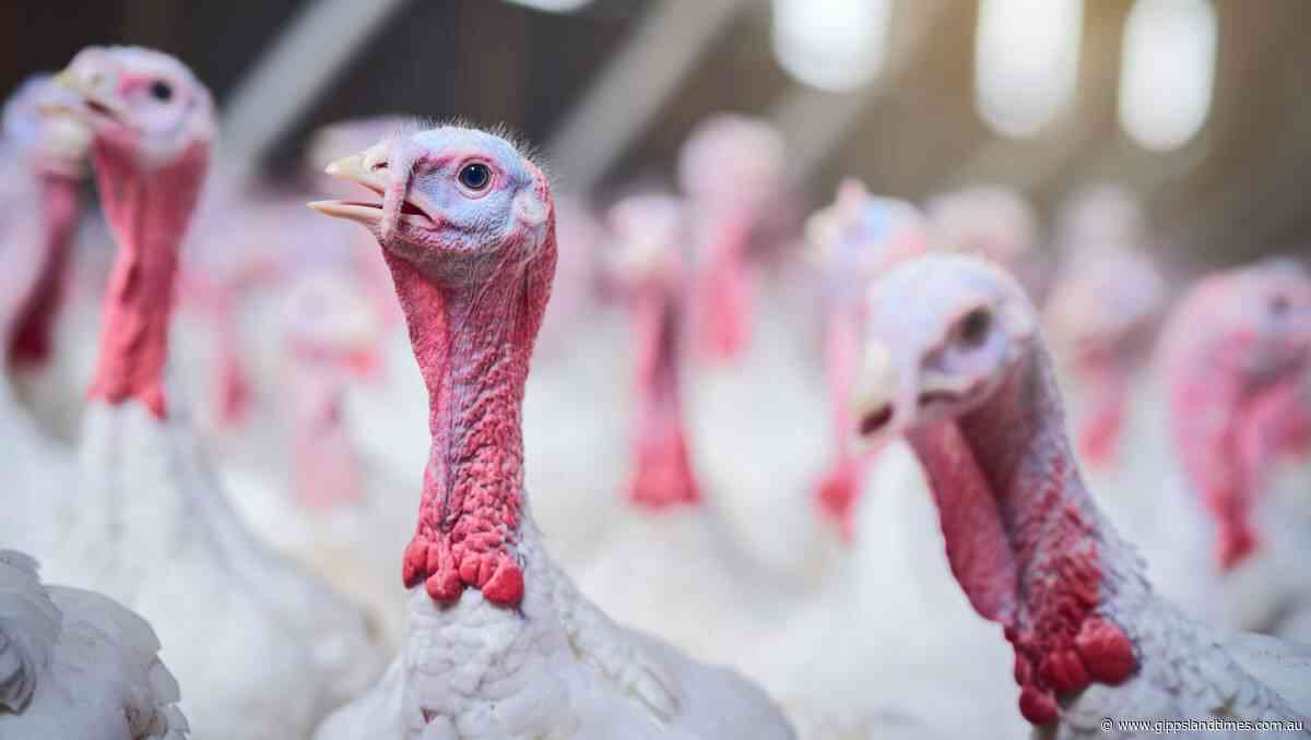Bird flu detected at farm near Bairnsdale - Gippsland Times