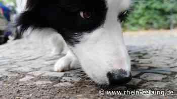 Den Hund vor Giftködern schützen - Leben mit Tieren - Rhein-Zeitung