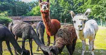 Tieren auf Augenhöhe begegnen - Neue Westfälische