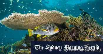 Cutting green funds would be 'very foolish' says Barrier Reef Special Envoy