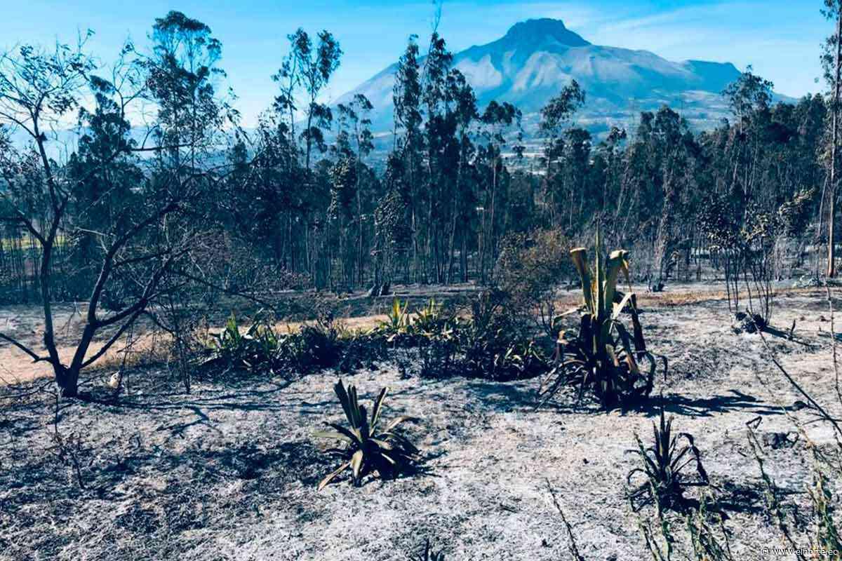 18,84 hectáreas fueron afectadas en un incendio en Cotacachi - Diario El Norte