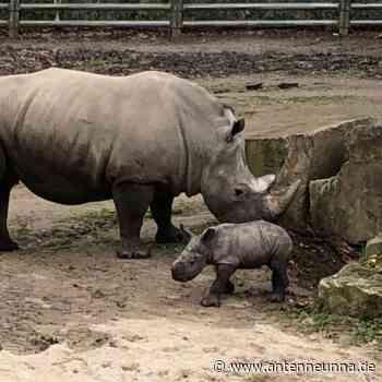 Zoo Dortmund: Wieder Besuche ohne Reservierung - Antenne Unna