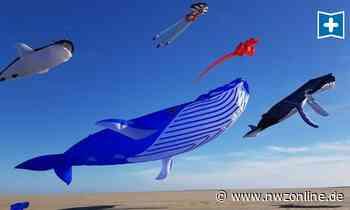 Flugfestival Am Wochenende: Drachen im Anflug auf Westerstede - Nordwest-Zeitung