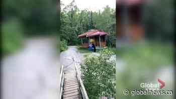 Black bear spotted near Pinawa's suspension bridge | Watch News Videos Online - Globalnews.ca
