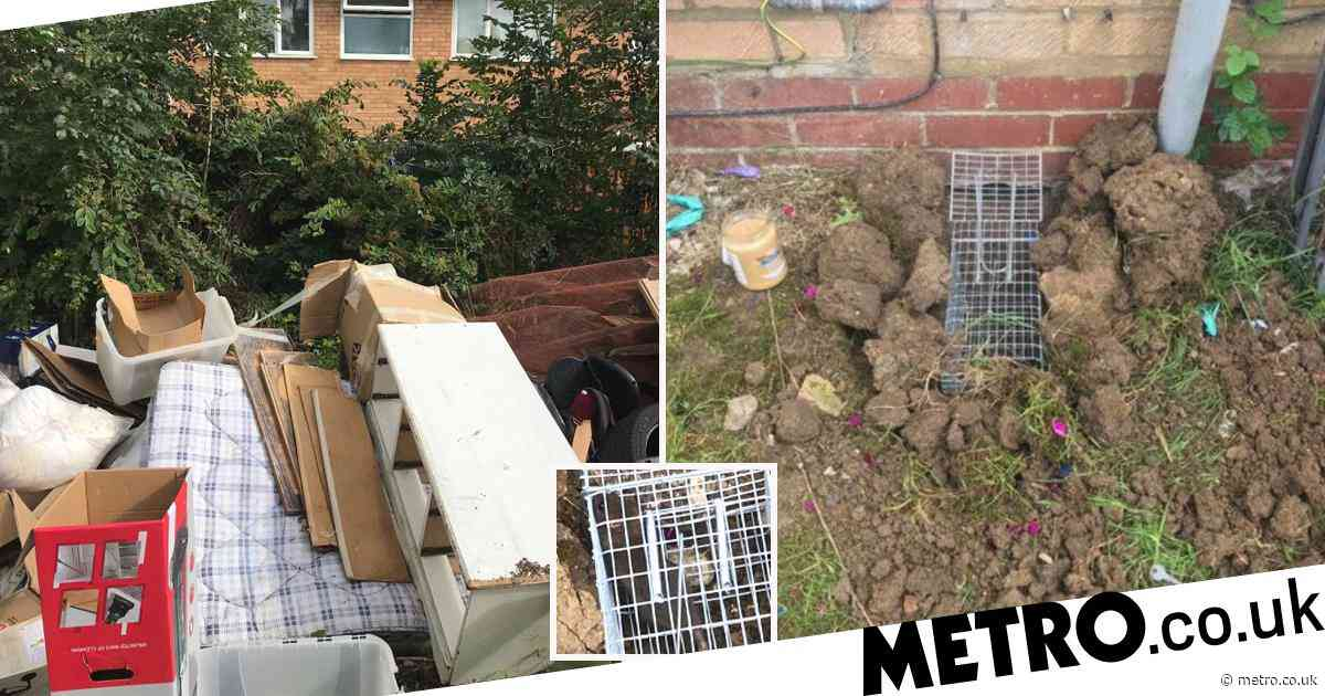 Mum's home overrun with huge 'super-rats' which seem to be immune to poison