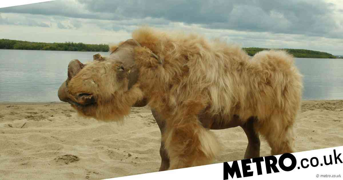 Woolly rhinos were exterminated by climate change, study says