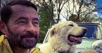 Grenzt an Tierquälerei: Laufen mit Hund ist bei dieser Hitze ein Tabu - FOCUS Online