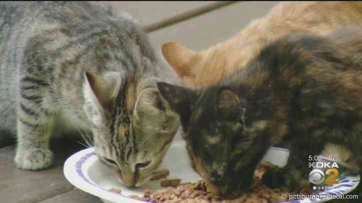 More Than 30 Cats And Kittens Abandoned Without Food Or Water At Washington Co. Home
