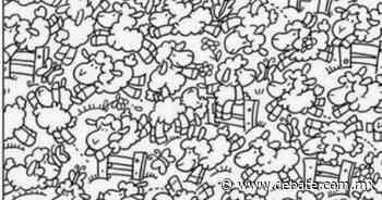Reto viral: Encuentra al pollito entre las ovejas en menos de 15 segundos - DEBATE