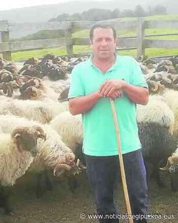 """""""Las ovejas estaban como en hilera, se te parte el corazón"""" - Noticias de Gipuzkoa"""