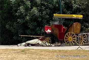 Italie. Un cheval tirant une calèche de touristes meurt d'épuisement - maville.com