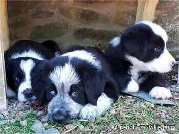 Hautes-Alpes. Une trentaine de chiens et chiots maltraités secourus - maville.com