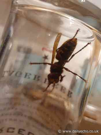 'The key is not to throw anything at them': Southampton man finds at least 20 hornets in block of flats