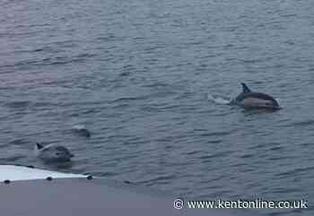 Pod of dolphins spotted in Medway