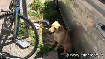 Cucciola legata ad un palo sotto il sole cocente, l'agente lo salva e lo adotta