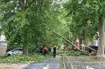 Magny-en-Vexin : inondations et arbres brisés après les pluies diluviennes - Le Parisien
