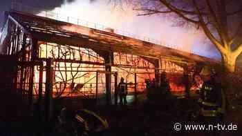 Feuer in der Silvesternacht: Affenhaus-Brand kommt jetzt vor Gericht
