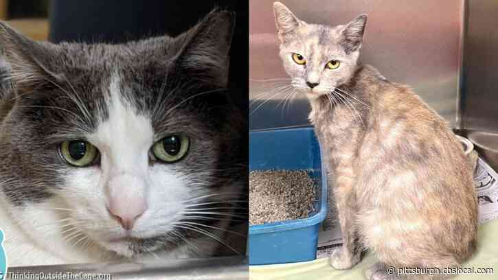 Furry Tails: Justice & Gypsy Are Waiting For Forever Homes