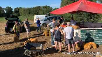 Cueillette des pommes de terre à Arthon : un succès qui ne se dément pas - France Bleu