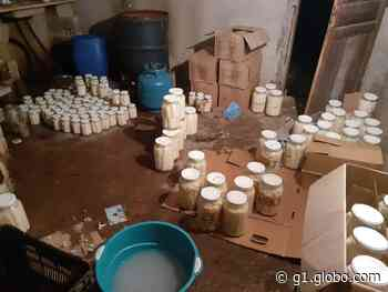 PM Ambiental desmonta fábrica clandestina de palmitos e multa dono em R$ 91 mil no Vale do Ribeira - G1
