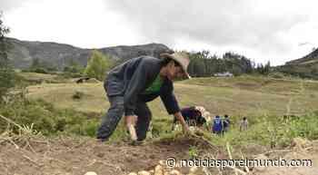 La Libertad: estiman un 80% de pérdidas para agricultores del valle Chicama LRND   Sociedad - Noticias por el Mundo