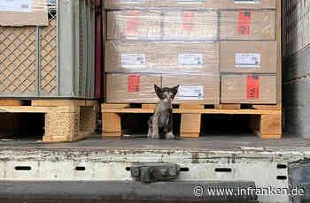 Von Tunesien nach Kahl am Main: Katze reist 5 Tage unbemerkt in Lastwagen mit - inFranken.de
