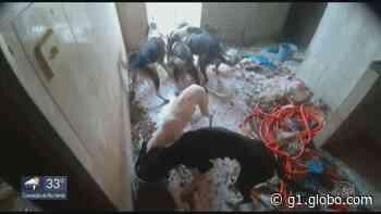 Polícia investiga maus tratos e abandono de cães em residência de Muzambinho, MG - G1