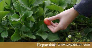 Frutas Maripí busca inversor - Expansión.com