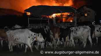 Rund 100 Rinder sterben bei Bauernhof-Brand im Unterallgäu - Augsburger Allgemeine