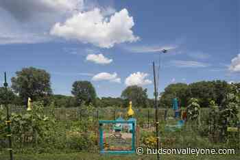 Cultivating harmony at New Paltz Gardens for Nutrition - Hudson Valley One