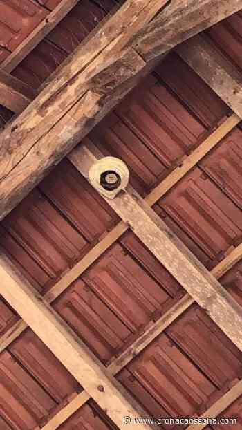 Bimbi punti da vespe al parco di Cusago. In shock anafilattico ad Albairate. Calabroni a Corbetta - CO Notizie - News ZOOM