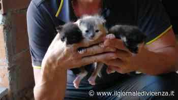 I vigili del fuoco salvano gattino appena nato - Il Giornale di Vicenza