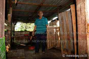 La Romaine goat farmer loses all hope - Trinidad News