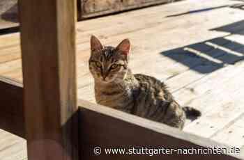 Lauffen am Neckar - Kletteraktion an Rolltor bringt Katze in die Bredouille - Stuttgarter Nachrichten