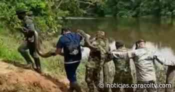 Así liberaron a una anaconda sobre la ribera del río Caguán en Caquetá - Noticias Caracol