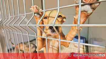 Unidade de Boliqueime vai salvar animais em perigo - Correio da Manhã